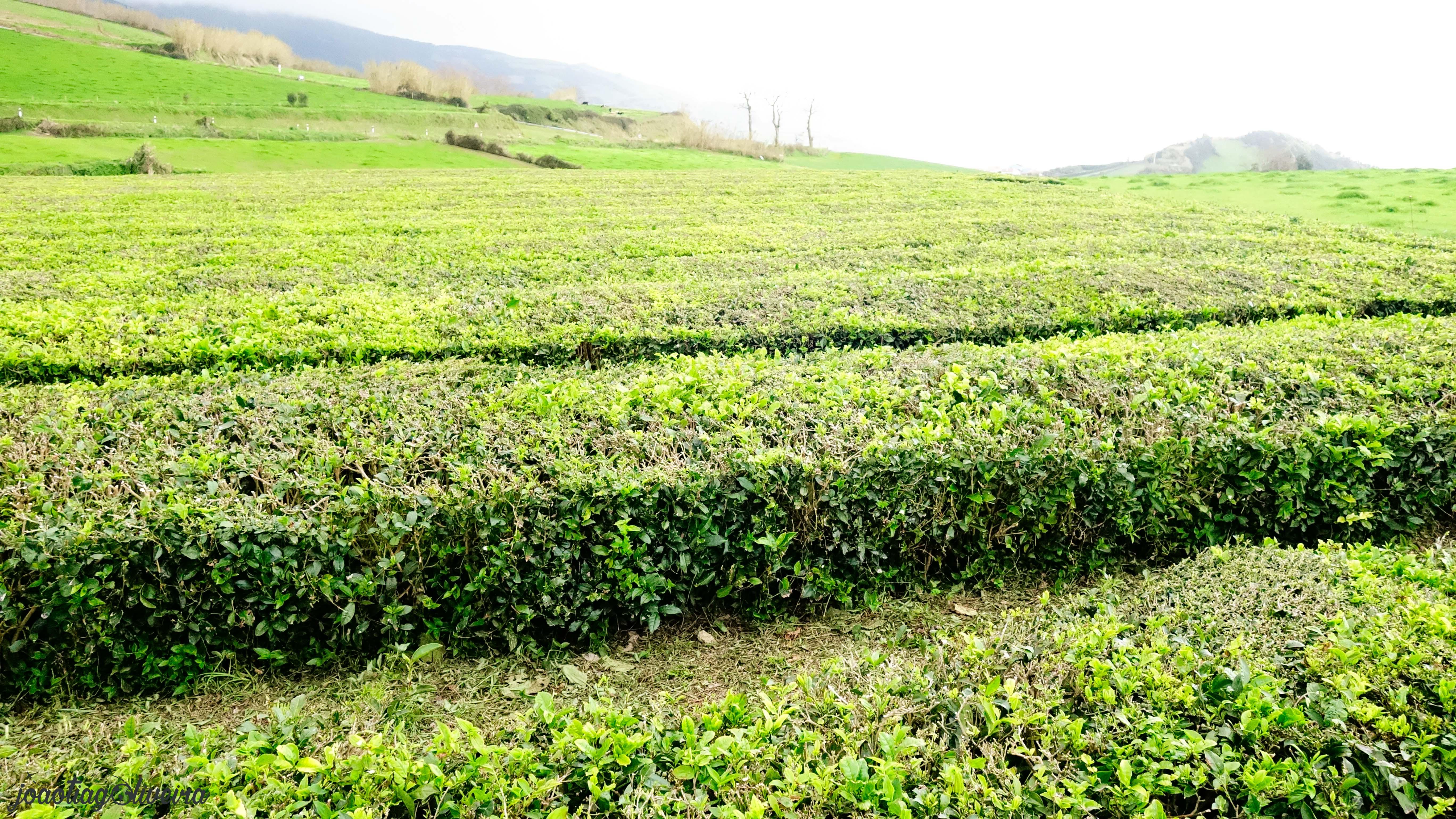 joao tiago oliveira travel blog Açores 13